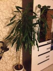 Растение, в Екатеринбурге