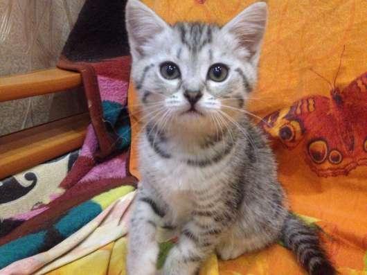 Продам котят в Новосибирске Фото 3