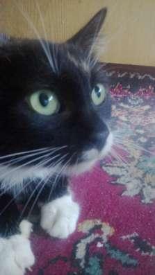 Отдам даром Кошка Ася