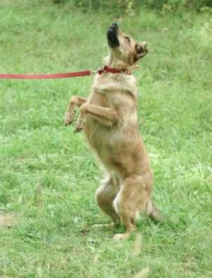 Отдам даром Спортивная и энергичная собака Молли