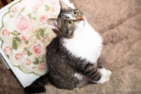 Фрося - не кошка, а мечта. в Москве Фото 5