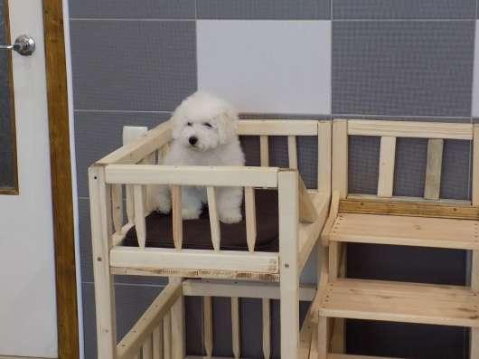 Кровать для нескольких собак в г. Минск Фото 1