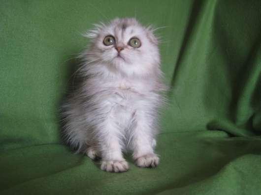 Котик - маленький НЛОшка