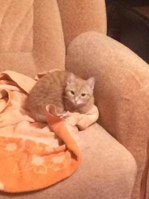 Передержка кошек на дому (в период командировок и отпусков)