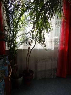 Финиковая пальма 3,5 м в Москве Фото 1