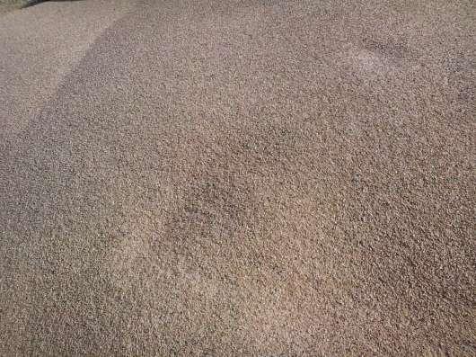 Пшеница фуражная фасованная по 50 кг