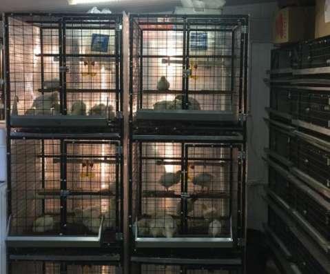 Клетки для птиц, Клеточные батареи, Брудеры