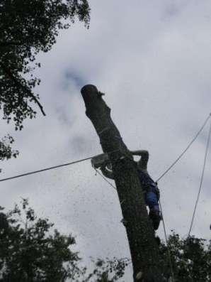 Спилить удалить дерево в Жуковском. Кратово, Быково, Ильинская
