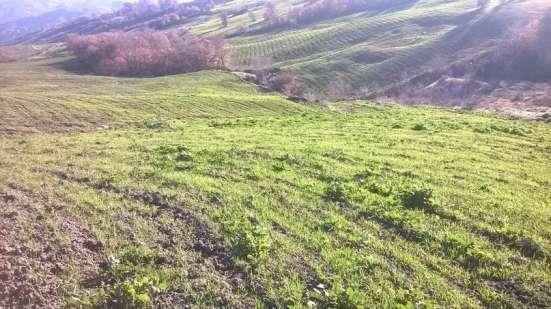 Продам срочно свой тройной участок земли в 9,5 гектар в г. Molise Фото 4