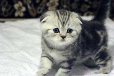 Очаровательные котята на продажу