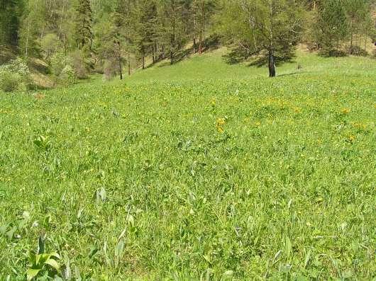 Купить земельный участок в Чемальском районе 6,5 Га в Горно-Алтайске Фото 2
