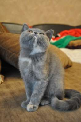 Продажа котят в Кемерове Фото 3