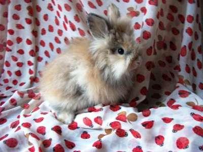 Крольчонка