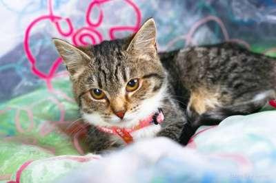 Отдам даром Любознательный котенок Стефан ищет дом. в Москве Фото 2