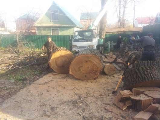 Спилить дерево, деревья в г. Самара Фото 3