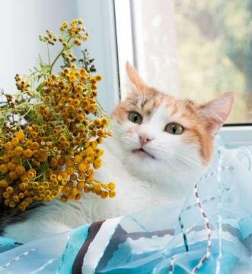 Трехцветная кошечка Мисюсь в добрые руки