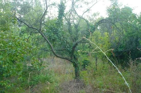 Земельный участок в р-оне Хаста Баш
