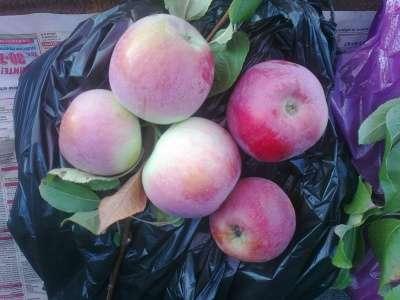 Овощи и фрукты из Краснодара