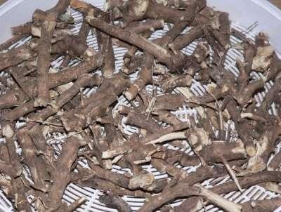 Элеутерококк колючий: семена, саженцы