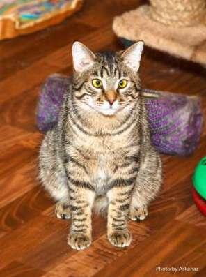 Полосатый косоглазый звездный котик Ганс ищет дом! в Москве Фото 1
