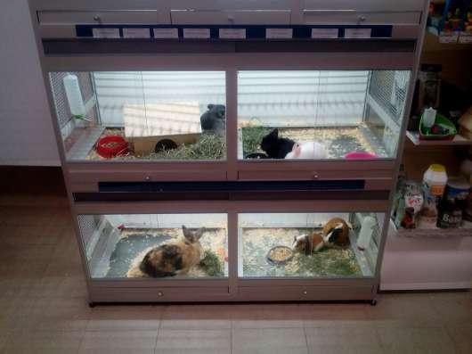 Акция при покупке кролика