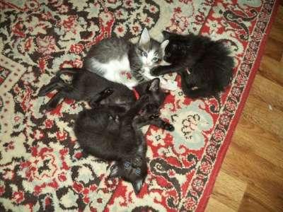 котята в Чебоксарах Фото 2