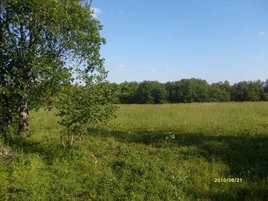 4.1 га земли сельхоз.назначения в 10 км от Углича Яросл. обл Фото 4