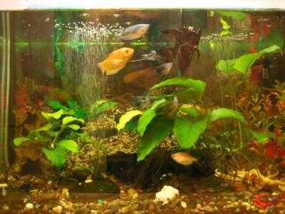 СРОЧНО !!! 2 аквариума действующих в Москве Фото 6