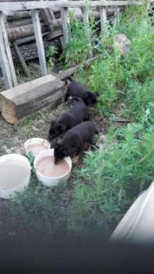 Отдам даром щенки для частного дома в Омске Фото 3